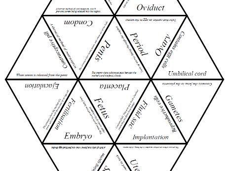 Biology Tarsia Puzzle: Human Reproduction