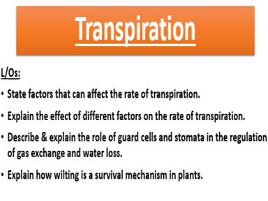 New spec AQA GCSE Transpiration lesson (Plant tissues Topic)