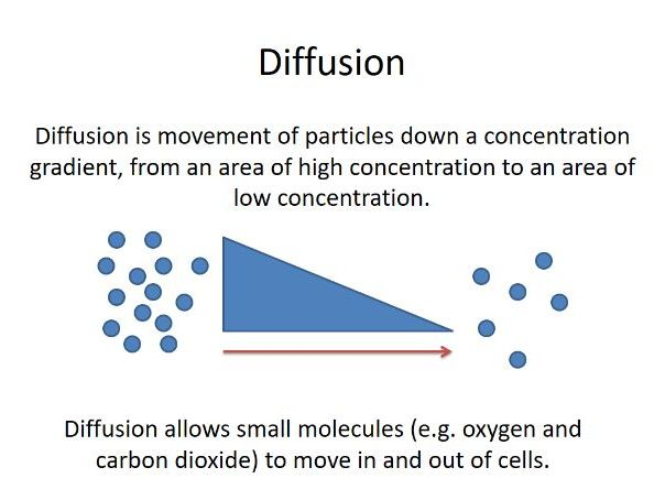 Transport of substances (diffusion and osmosis).
