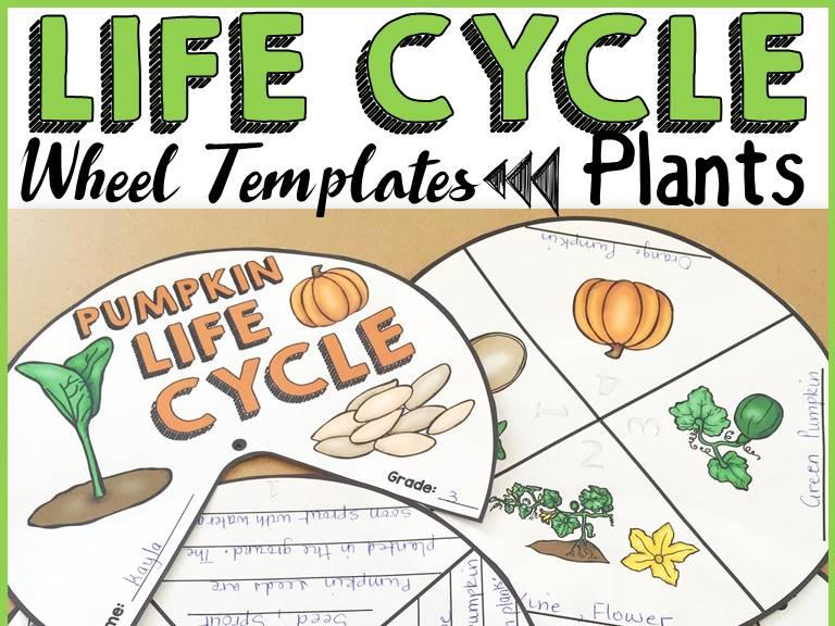 LIFE CYCLE WHEELS: PLANTS