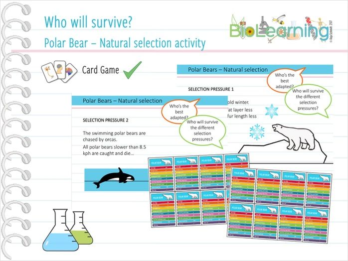 Polar Bears & Natural Selection -  Card Activity (KS3/KS4)