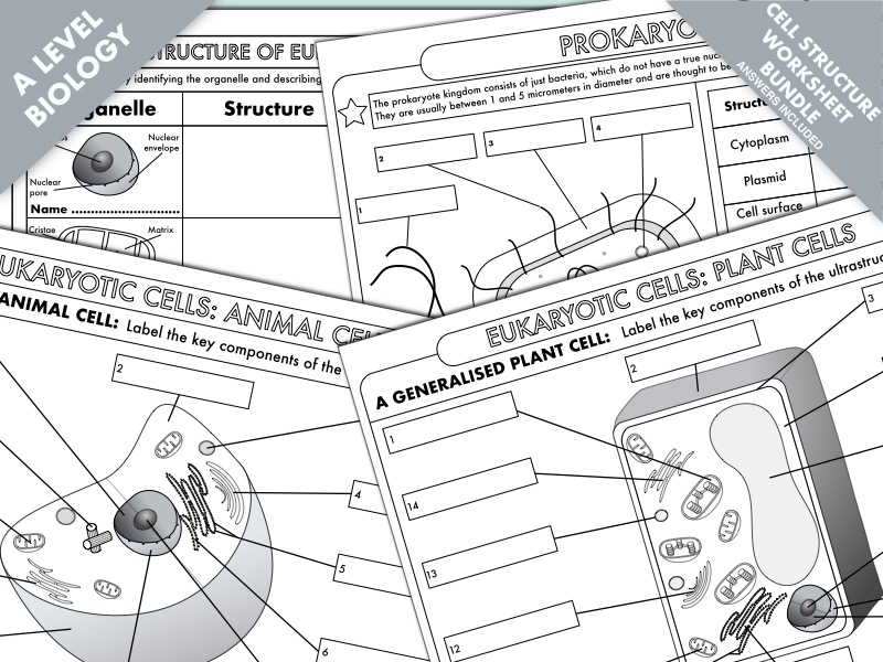 A Level Biology: Cell Structure Worksheet Bundle