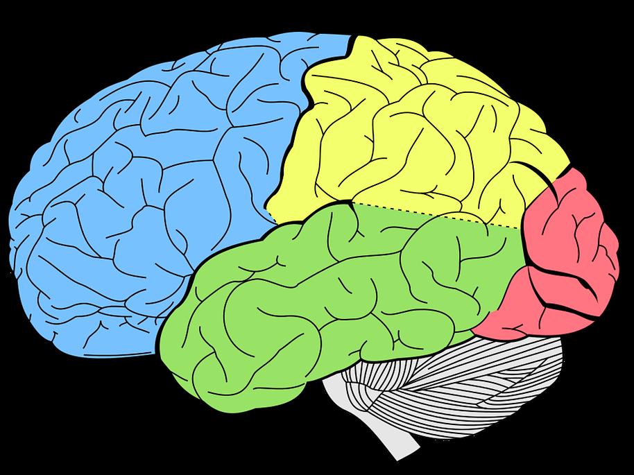 Short-term Memory Programme