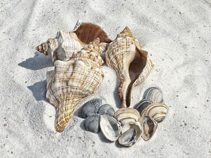 Shells can be... Writing & Colouring Sheet + Guide