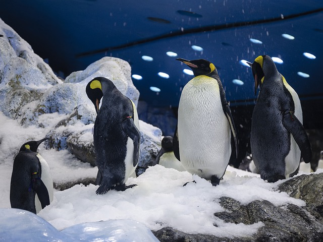 Dance of the Penguins - Funny Poem