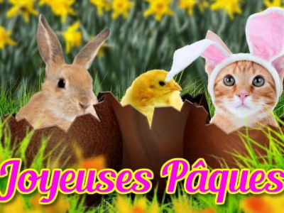 Easter Quizz: revision for colours, numbers etc. theme de paques