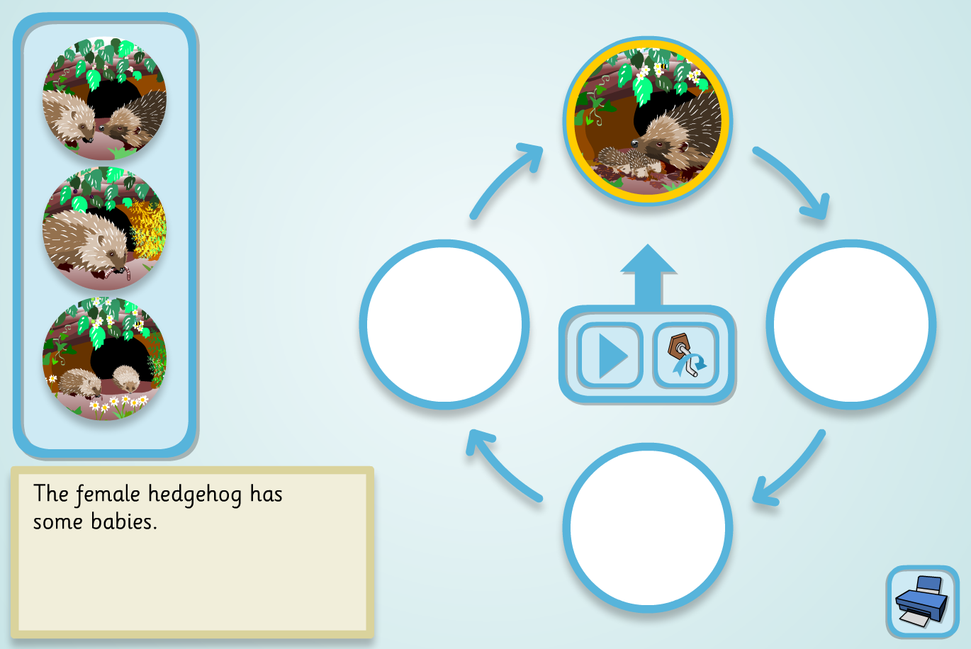 A Hedgehog's Year Lifecycle Sequencer (Simple) - KS2 Literacy