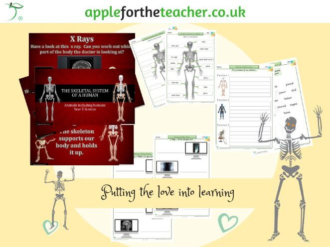 Skeletal system of a human and its functions science KS2