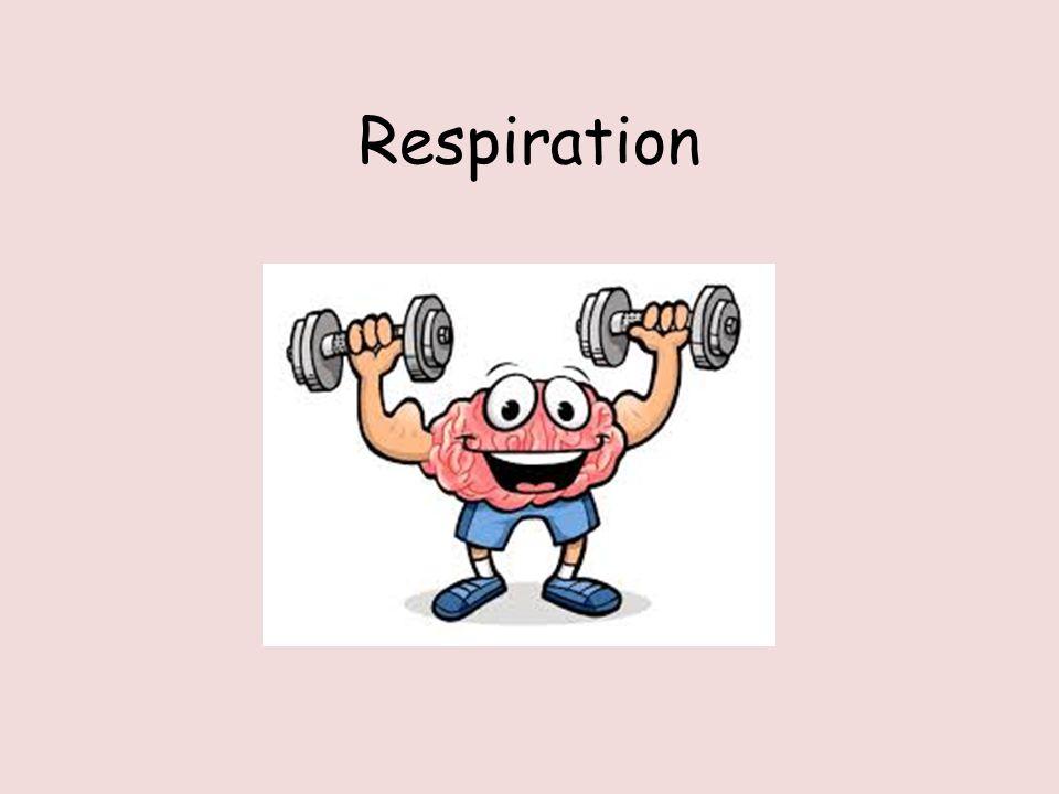 RESPIRATION ( 5.7) OCR A A-level biology BUNDLE