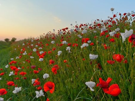 British Council Peace and Armistice resource