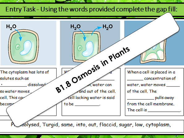AQA GCSE B1.8 Osmosis in plants (Required Prac) (2018 SPEC)