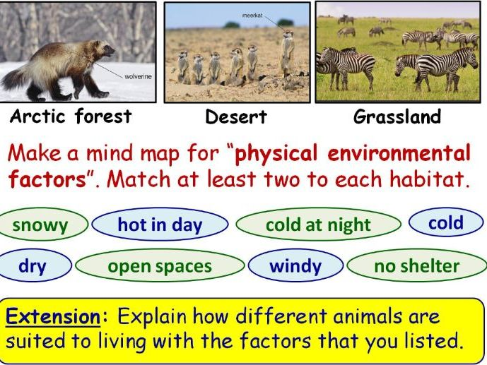 Adaptations Year 7 Lesson PowerPoint (KS3 7Db) Ecosystems topic