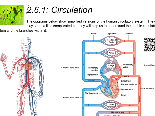 Blood vessel diagram gcse wiring library aqa gcse biology trilogy lesson 19 blood vessels by bspbiology rh tes com structure of blood ccuart Choice Image