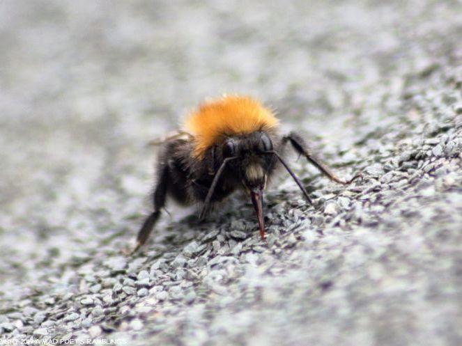 The Tree Bee