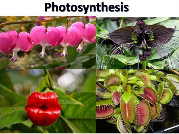Photosynthesis Unit resource bundle ( 5.6/5.2.1) -OCR A-level biology A-specification