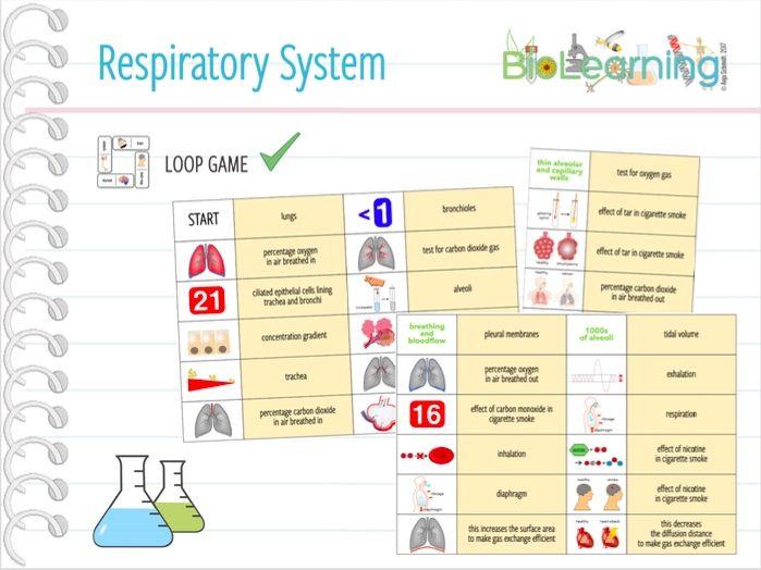 Respiratory System - Loop Game (KS4)