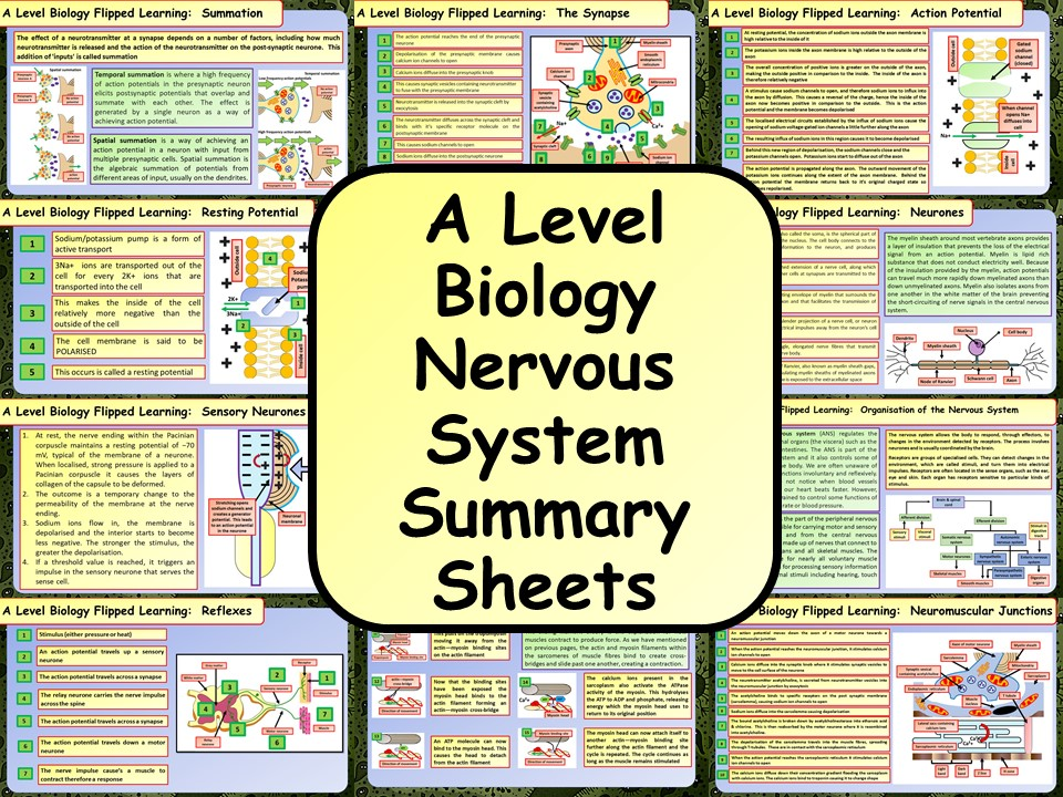 A Level Biology Nervous System Summary Sheets | Teaching Resources