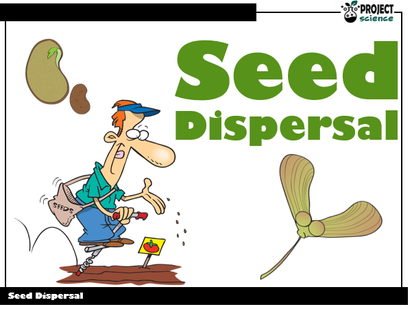 Seed Dispersal PowerPoint