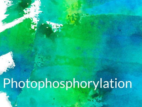 Light Dependent Reaction Photophosphorylation presentation