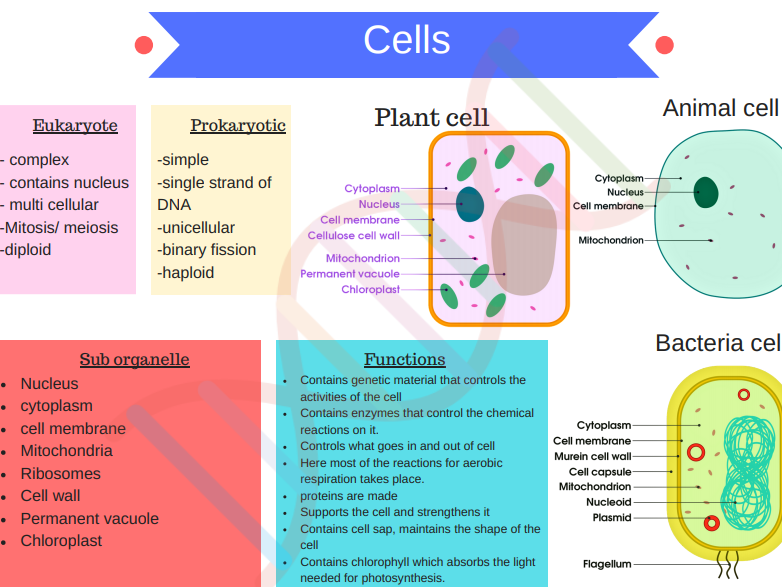 B1 Cell biology revision notes GCSE AQA 9-1