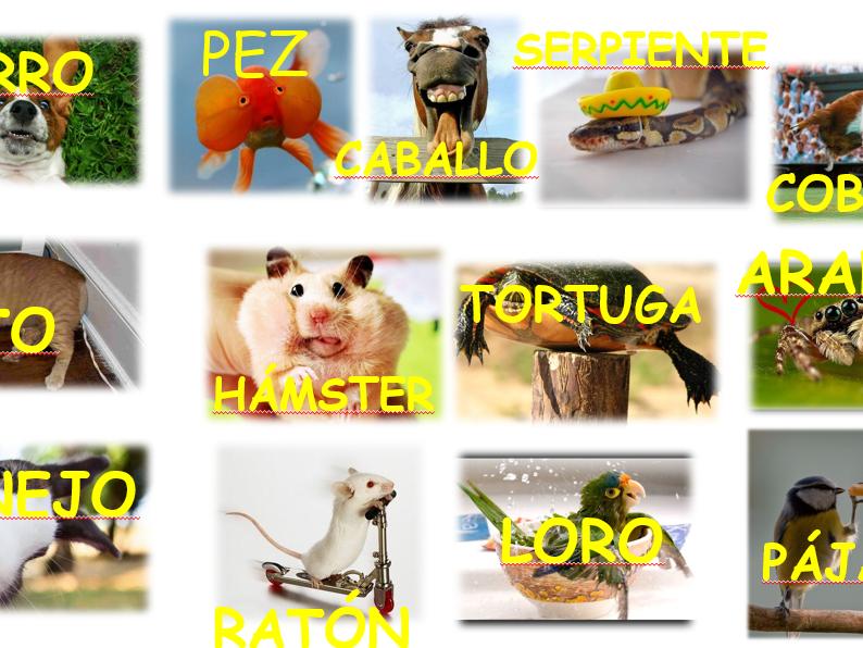 Year 7 - Los Animales -Las Mascotas - Spanish
