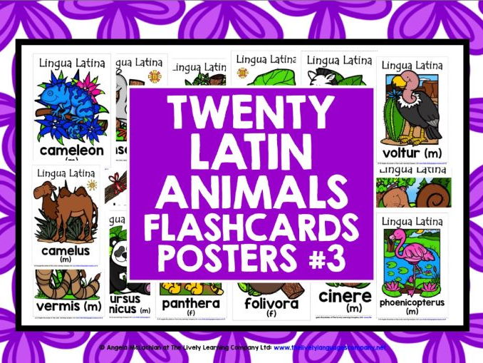 PRIMARY LATIN ANIMALS FLASHCARDS POSTERS #3