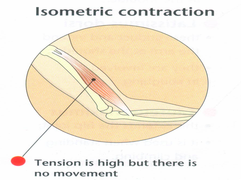 GCSE P.E - Different Ways Muscles Contract
