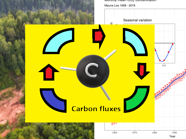 Feedback systems in the carbon cycle.