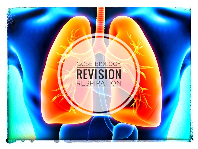 Revision. GCSE Biology. Respiration Revision Sheets