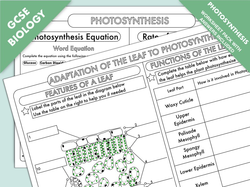 GCSE Biology: Photosynthesis Worksheet Pack