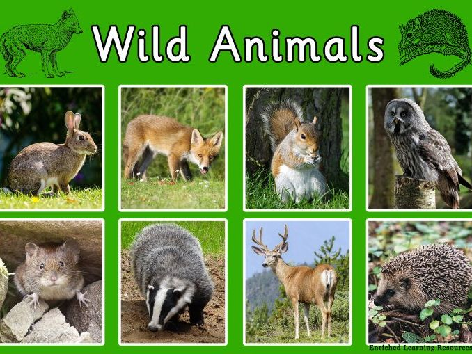 WILD ANIMALS -COUNTRYSIDE  - A4-POSTER