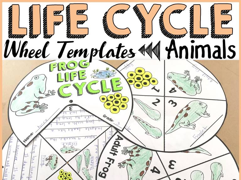 LIFE CYCLE WHEELS: ANIMALS