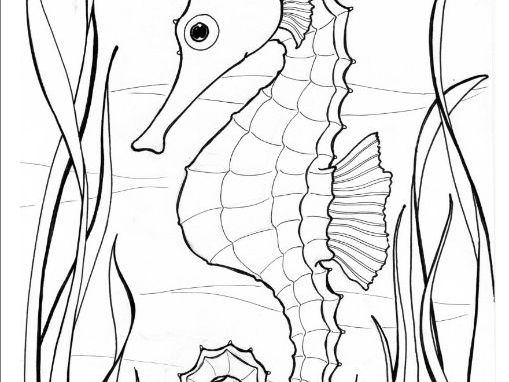 Seahorse colouring page, oceans