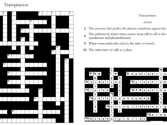 Transpiration: Crossword; A-level or IB