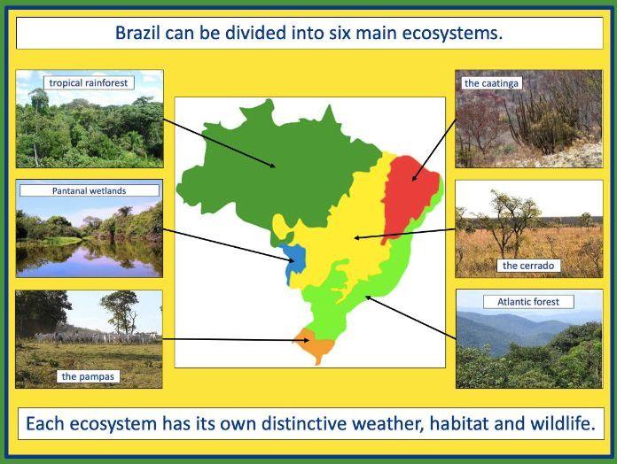 Exploring Brazil's ecosystems - KS2