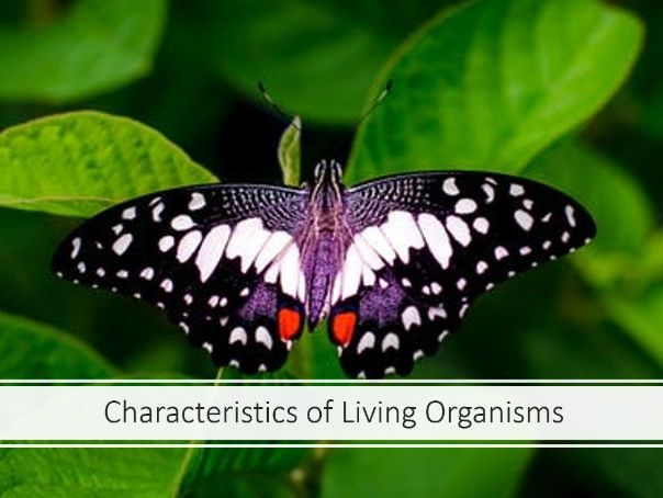 Characteristics of Living Organisms iGCSE Combined Science Cambridge CIE