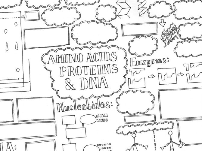 Hand-drawn Chemistry - A-level Amino acids, Proteins, and DNA Summary Sheet