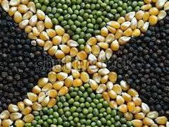 Reggae Reggae Harvest