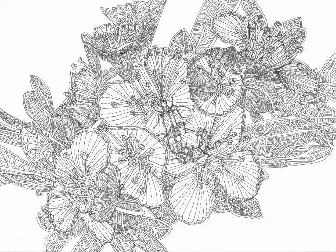 Minibeasts: Beetle on Flower Blossom