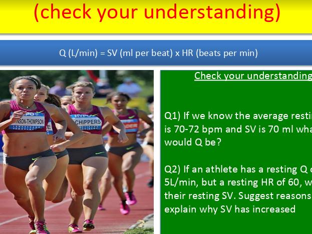 Heart rate, stroke volume & cardiac output (A Level PE)