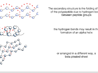 Protein structure animated PowerPoint slides for A level biology