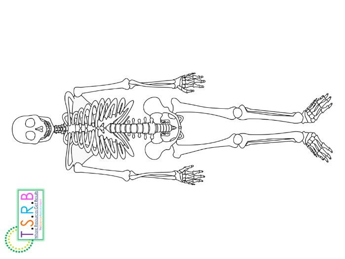 graphic relating to Skeleton Printable titled Lifestyle Dimensions Skeleton Printable