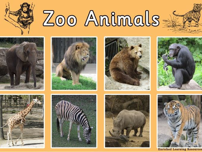 ZOO-ANIMALS - A4 POSTER - No 1