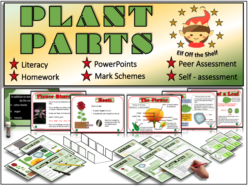 Plants - Anatomy of the Flowering Plant KS3