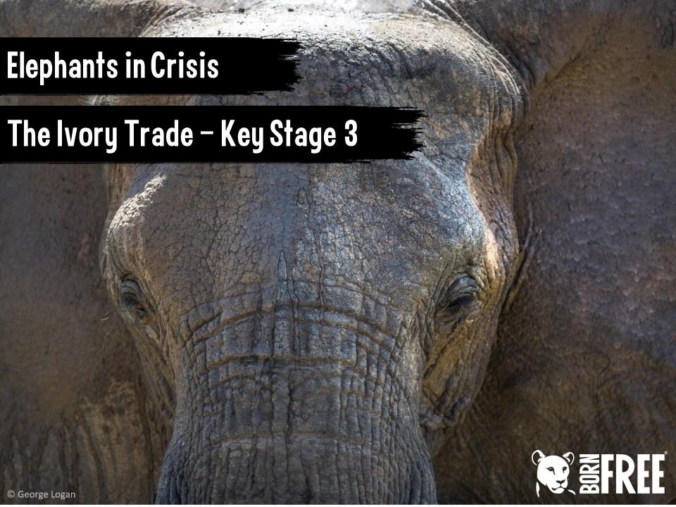 Elephants in Crisis - The Ivory Trade. Short scheme of work for KS3 & KS4. Born Free.