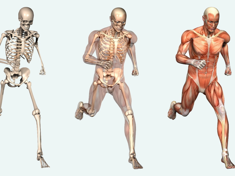 L3 Btec Sport Unit 1 Anatomy And Physiology P3 Location Of