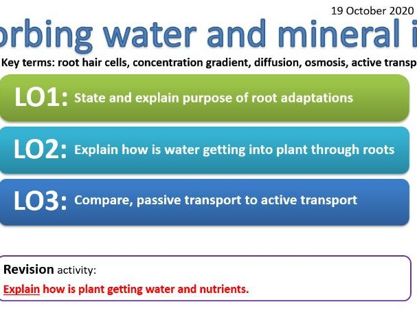 CB6c - Absorbing water and mineral ions -root hair cells, concentration gradient, diffusion, osmosis