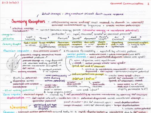 OCR A Level Biology Neuronal Communication Revision Poster