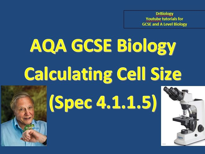 GCSE AQA Biology - Cell Magnification maths skills