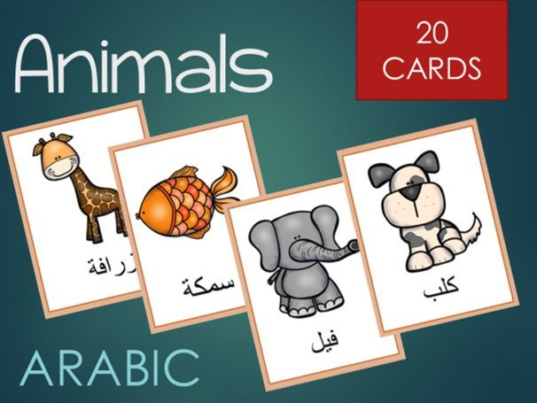 Arabic animal words cards